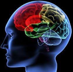 人の脳のMAP